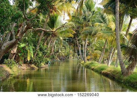 India Coco trees reflection at back waters of Kerala