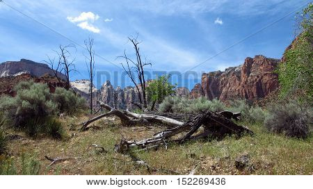 A dead tree lying on the ground in the tall grass. In the background, the mountains with colorful rocks. Photo taken inside the Zion Park in Utah, USA. Light, natural colors.