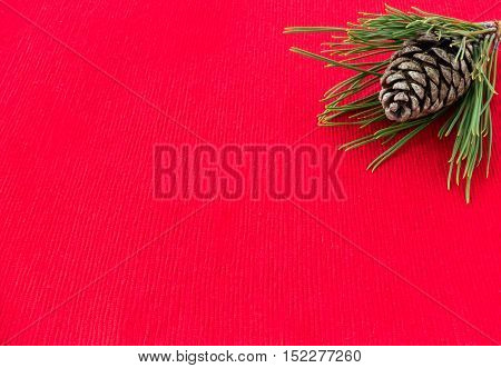 Natural pine cone inside a small pine tree twig isolated on a red background.
