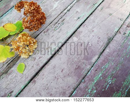 Arrangement of dried flowers with leaves on old wooden boards background with free space -place for photo and text. Autumn still life with hydrangea hortensia on vintage wooden texture.