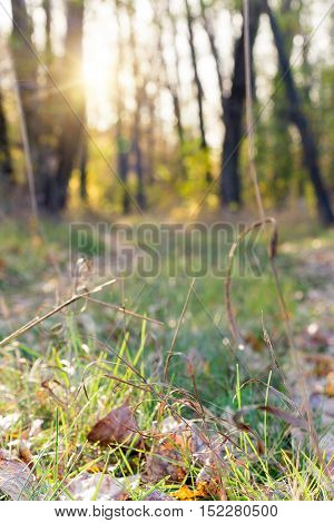 Path in the autumn forest blurred. Path in the autumn forest blurred. The path is strewn with dry leaves. Through the forest the sun shines