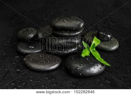 Spa concept with heap of the black basalt massage stones and green bamboo sprout covered with water drops on a black background
