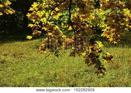 Colorful autumn leaves hanging on tree branch