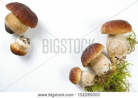 Fresh wild porcini mushrooms (boletus edulis) on white background copy space