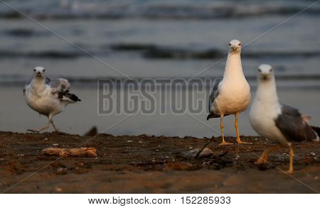Seagulls At The Beach In Summer