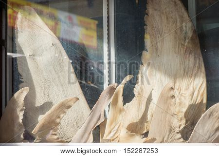 Shark fins on display at a Chinese restaurant in Bangkok Thailand. Cuisine and ecology concept.