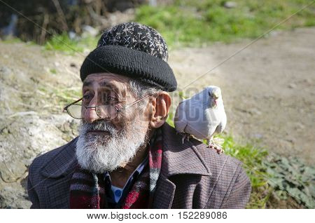 Istanbul Turkey - January 25 2015: White Bearded Grandfather and Pigeons friendly. Istanbul Topkapi bird markets bird seller grandfather was seen with pigeon on shoulder.