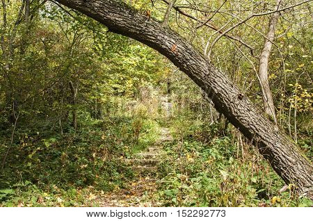 Path and sloping tree in autumn forest as natural background