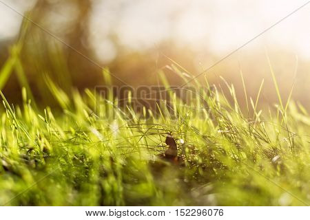 Natural green background with selective focus and bokeh