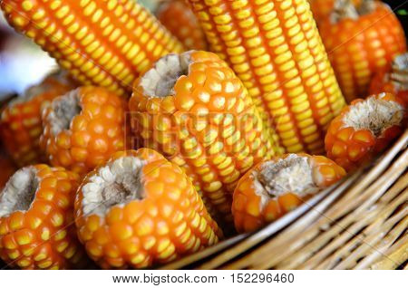 Dry Corn On Wall Of Agriculture Farm