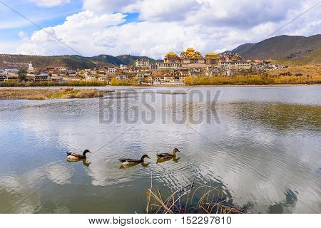 Beautiful Tibetan Buddhist monastery (Songzanlin temple) with ducks in lake in Shangri-la Yunnan province China.