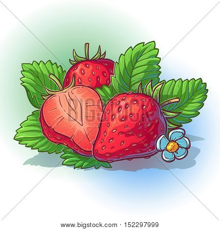 Vector illustration of a ripe and juicy strawberry with leaves