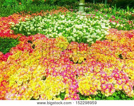 Las Vegas United States of America - May 05 2016: The Japanese flowering garden at luxury hotel Bellagio at Las Vegas United States of America