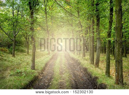 Cozy paved road in the autumn forest with sunlights