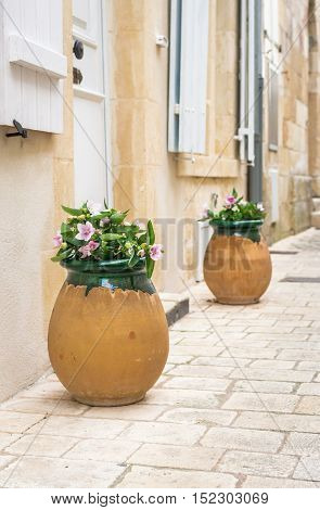 Pink flowers in a large clay pot outdoor