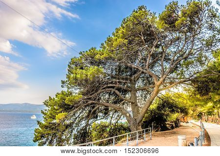 View at nature in Island Brac at Golden Cape beach resort in Croatia, Europe.