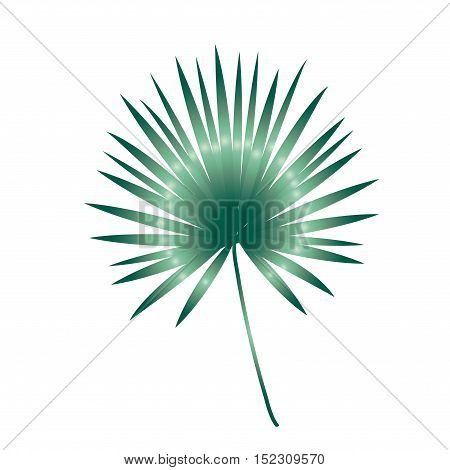 Palm tree leaf isolated on white background. Vector Illustration.