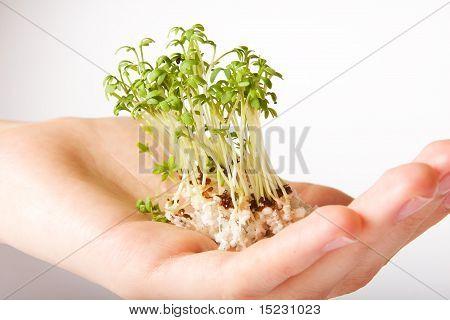 Tree Hand Life Green Small