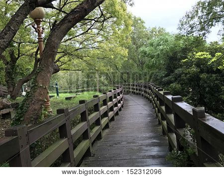 A beautiful walking trail in a recreational forest in Jeju Island, South Korea. Photo taken October, 2016.