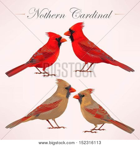Vector set of high detailed nothern cardinals