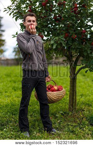 Boy Harvesting Apples