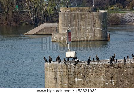 Cormorant on the pole of the destroyed bridge between meals