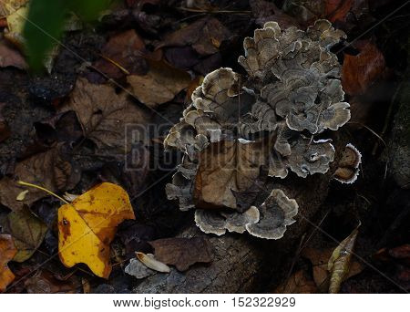 Lichen with brown and yellow Fall leaves