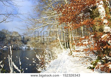 Frosty trees in the winter scenery . Winter landscape of frozen trees and lake.