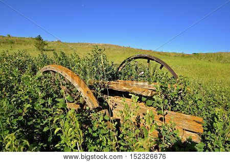An old wagon trailer with wooden wheels is buried in the long grass is in a state of disrepair.