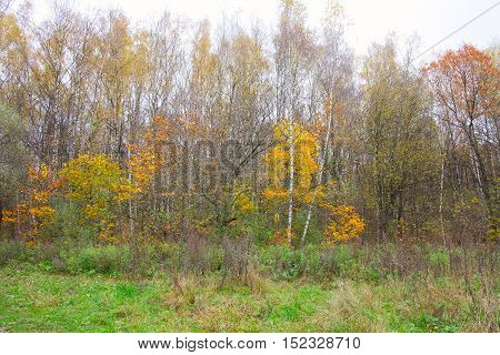 Group Of Trees In The Autumn Forest
