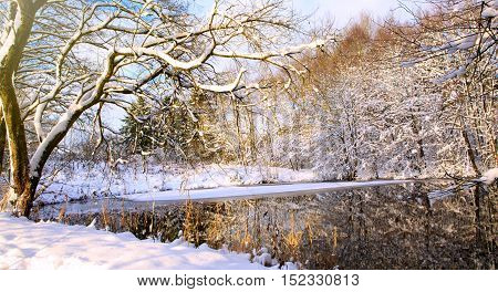 Frosty tree in the winter scenery . Winter landscape of frozen trees illuminated by the rising sun.