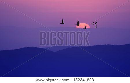 Flock of cranes spring or autumn migration over dark purple landscape