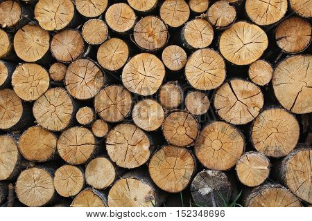 brown chopped fire wood logs in pile