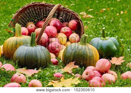 Freshly harvested pumpkins and apples on grass in autumn garden