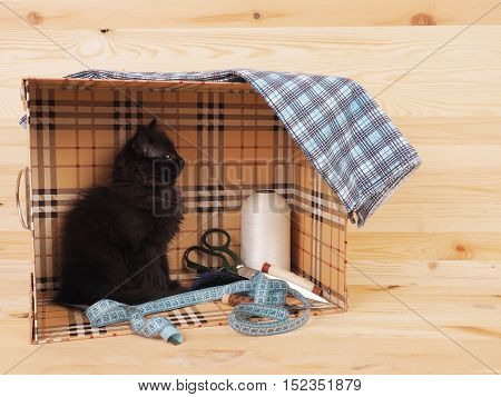 Black kitten in a box with items for sewing.