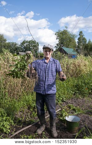 Middle-aged man holding a red tubers or potato tops in the country