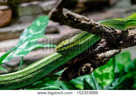 natural exotic jungle predator snake reptile wildlife