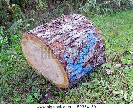 Wood marked for lumberjack for cutting down