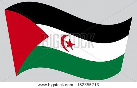 Sahrawi national official flag. Western Sahara patriotic symbol. SADR banner element background. Correct colors. Flag of Sahrawi Arab Democratic Republic waving on gray background vector