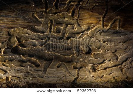 Old plank, with wood knots and cracked, layered rough surface,