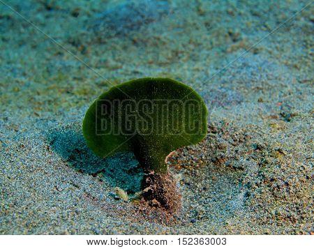 The surprising underwater world of the Bali basin, Island Bali, Puri Jati, sea alga