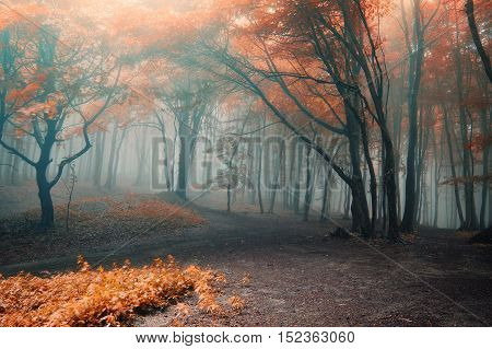 Foggy Spooky Autumn Forest. Halloween and Thanksgiving background