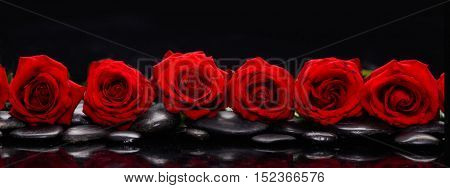 Still life with row of red rose and wet stones reflection
