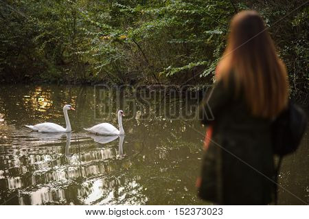 Picturesque autumn park. A girl stands on the shore of the pond. The water reflected autumn trees. Two white swans floating on the water surface of the pond. Wonderful early autumn.