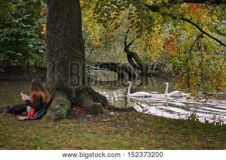 Picturesque autumn park. The girl in a bright red scarf sits having leant against a trunk of the big tree. She carefully reads his notes. Swans swim in the pond. Water reflects autumn trees.