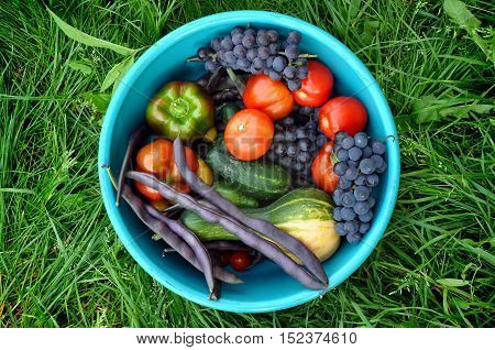 Zucchini, peppers, tomatoes, grapes ,cucumbers and beans in blue plastic basin on the green grass. Top view .