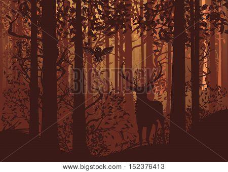 Autumn Forest Landscape And Deer