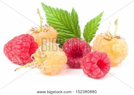 red and yellow raspberries with leaves isolated on white background