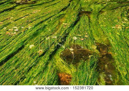 Wild River Kamenice flowing between rocks in the Czech Switzerland