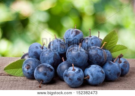 heap of blackthorn berries with leaves on a wooden table with blurred garden background.